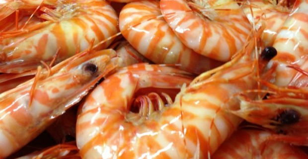 Fresh Local and Imported Prawns